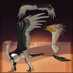 Auction #57 Egyptian vulture [Closed]
