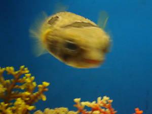 The Fish Says No