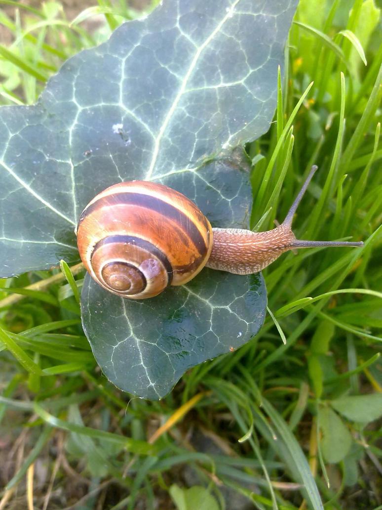 Snail by NightmareCucu