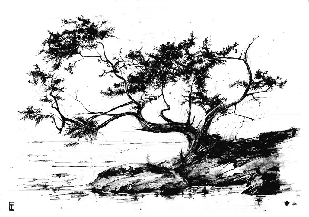 tree scenery wallpaper