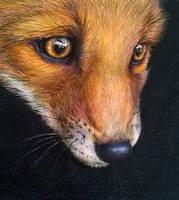 Fox in the morning by jyacini