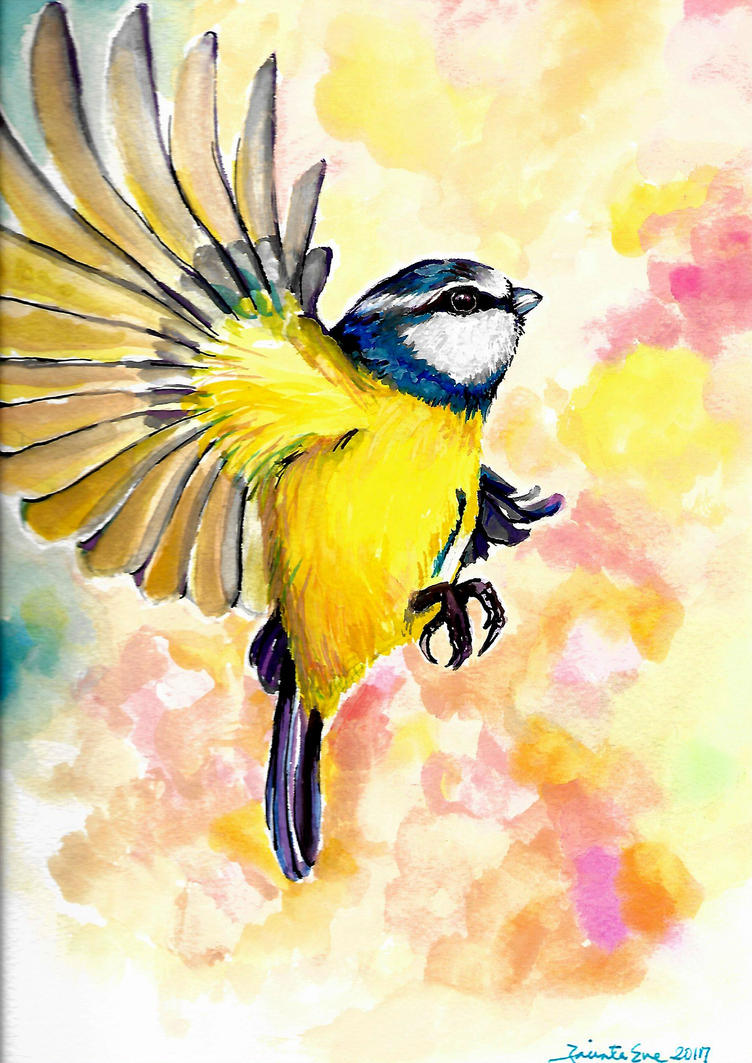 blue tit by jyacini