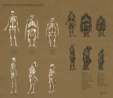 Races Skeletons by Artigas