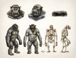 Orc Anatomy details