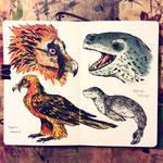 bearded vulture / leopard seal