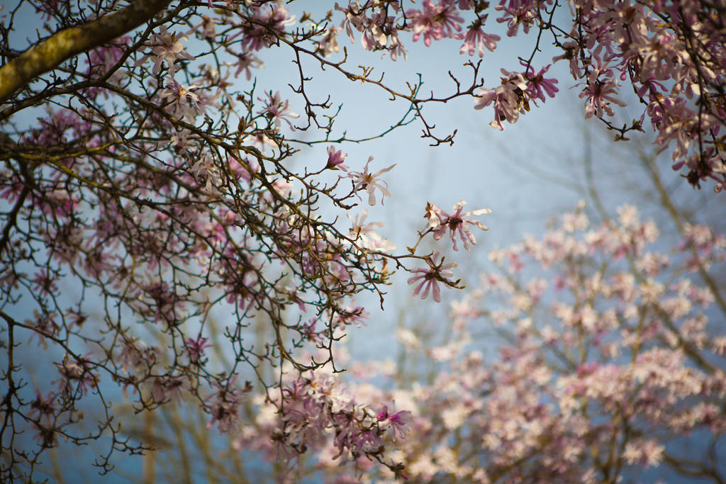 Blooming March by JtheQ