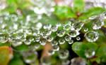 Hanging Droplets