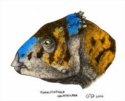 Homalocephale calathocera by commander-salamander