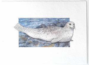 Harbour seal study
