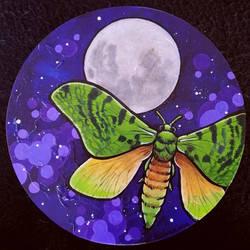 Puriri Moth Moon