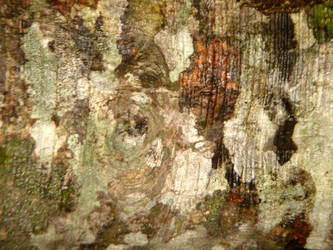 Bark Texture 2 by EE-Stock