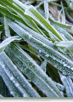 Unrestricted Texture - Frosty Grass