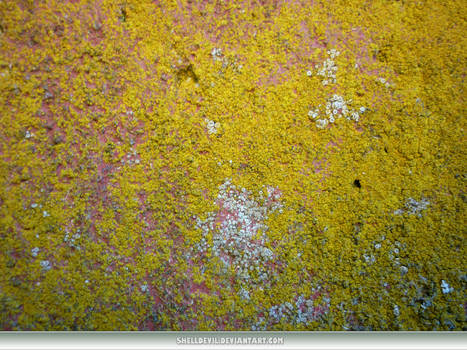 Unrestricted Texture - Mossy Stuffs