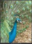 Unrestricted Animal Stock - Bird 41