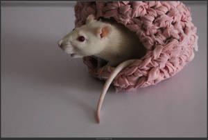 Animal Stock - Rats  (21) by shelldevil