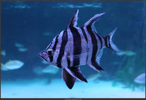 Unrestricted Animal Stock - Fish 01