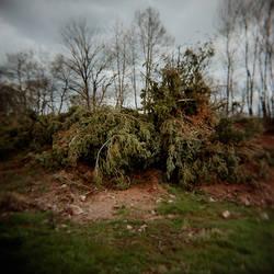 Le tas de branches by Mymosa