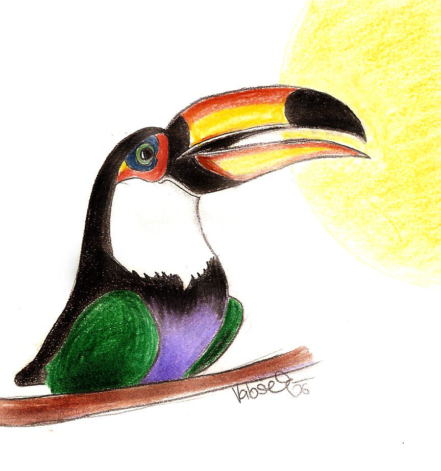 Toucan Drawing Step by Step my Drawing Toucan by