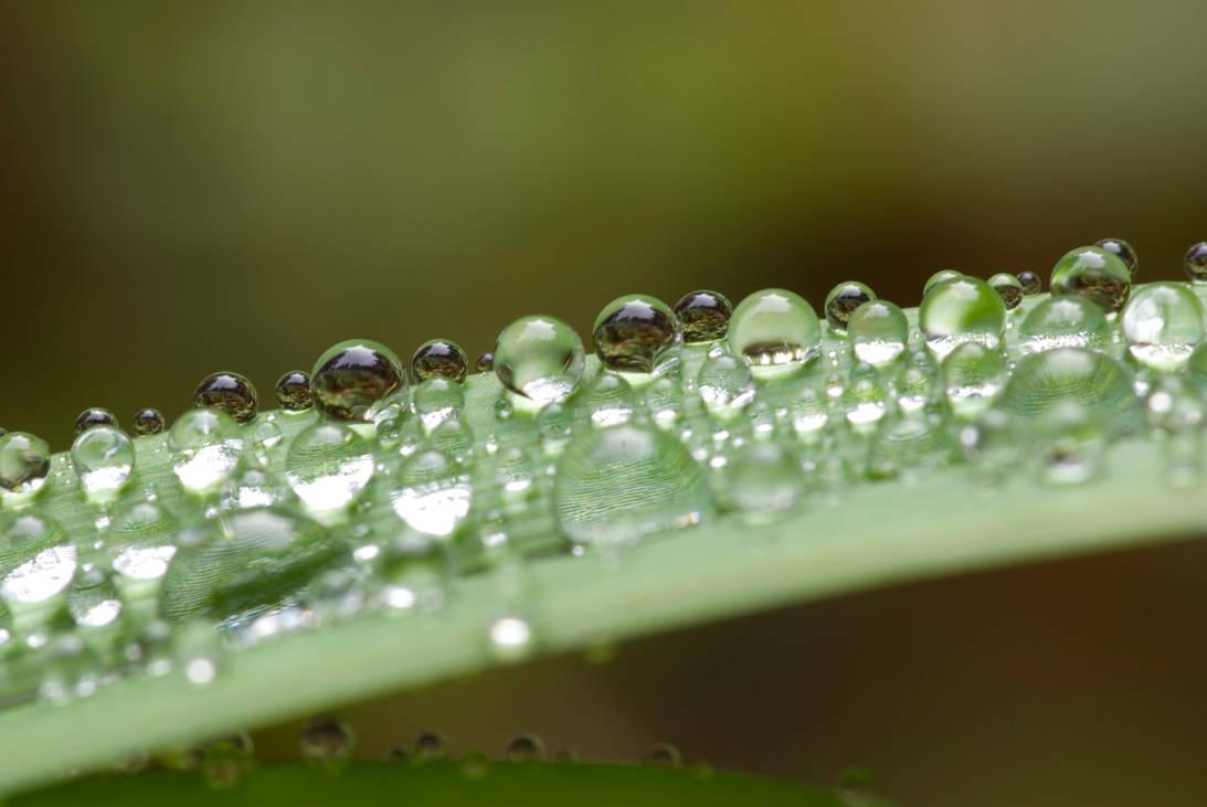 Morning Rain by Yiffyfox
