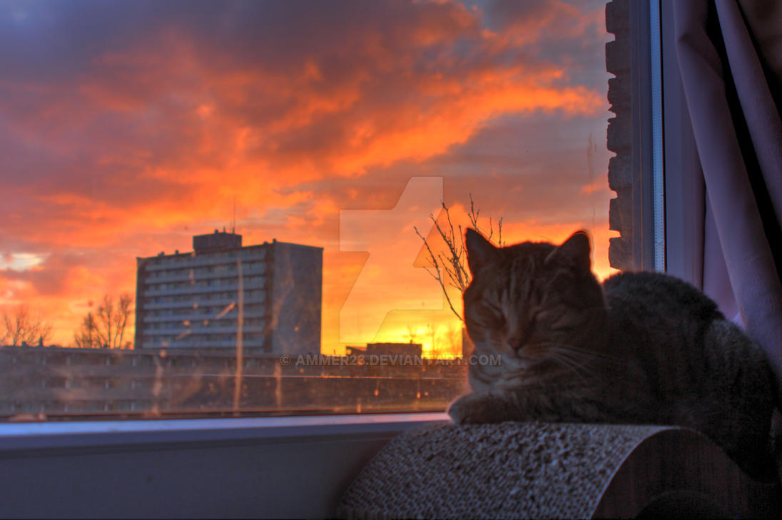 Topic des chats - Page 17 Sundown_cat_by_ammer23-dcwmzn3