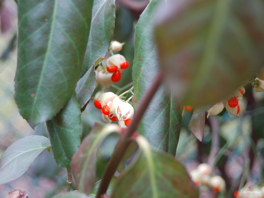 Secrets Of Nature Health Food Center