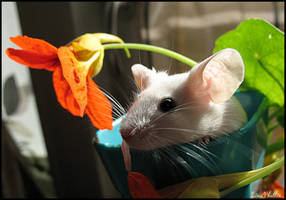 Mouse by Eliwyn