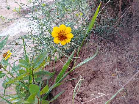 A Flower by the lake.