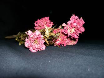 Dead Flower Stock 01