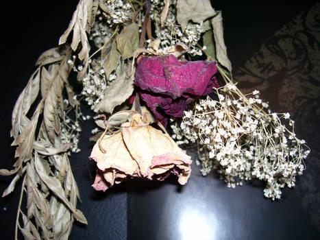 Dead Flower Stock 02