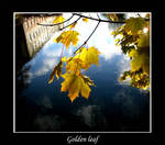 golden leaf.. by DeepIlusions