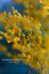 Always And Forever  By Sin4x by sin4x-ru