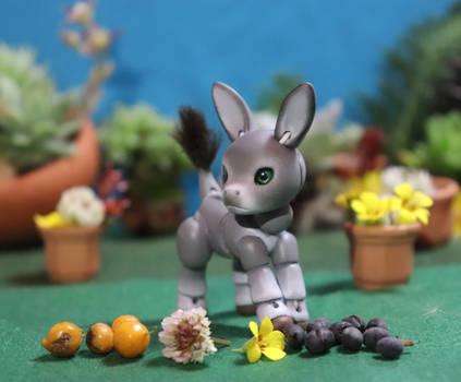 Muppy, the donkey