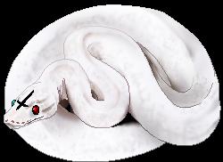 Ftu  Ball Python Pixel By Saint Venom-dba1jxc by M-o-m-m-i-e