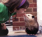 'Possum Kiss