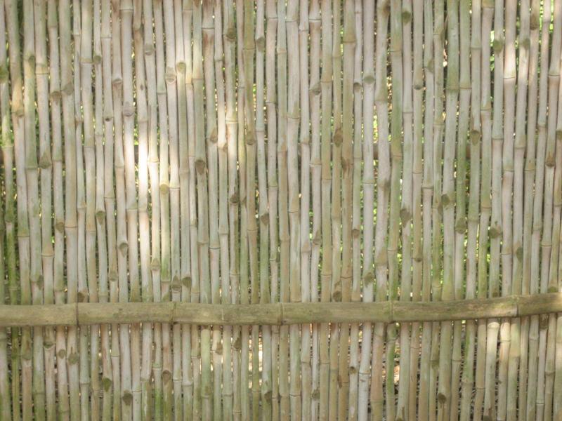 Bamboo by amptone-stock