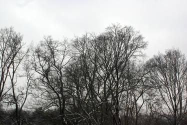 Trees 1 by amptone-stock