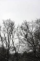 Trees 2 by amptone-stock