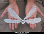 Intricate Papercut Dragonfly