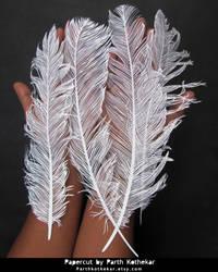 Papercut - Feather - Papercutting - Paper art