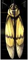Gaena Sulphurea Cicada by momma-kuku