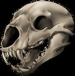 Skull - Bear by momma-kuku