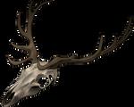 Skull - Deer by momma-kuku