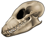 Skull - Fox by momma-kuku