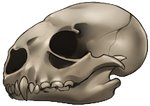 Skull - Otter by momma-kuku