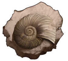 Shell fossil by momma-kuku