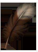 Small feather - Hazel by momma-kuku