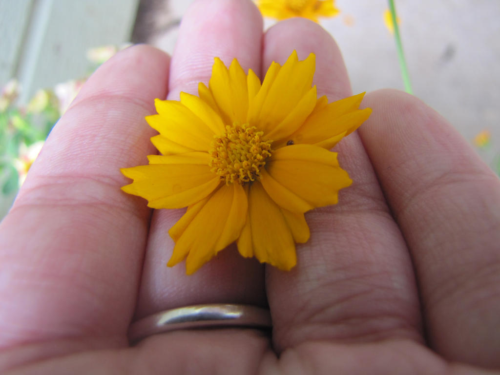 Yellow Flower Stock by Skysofdreams-Stock