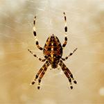 Örümcekler neden ağ örer?