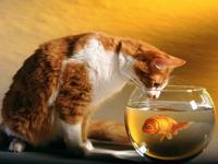 Balıklar su içer mi?
