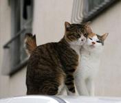 Kediler neden mart ayında çiftleşir?